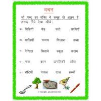 hindi plural worksheets for grade 3